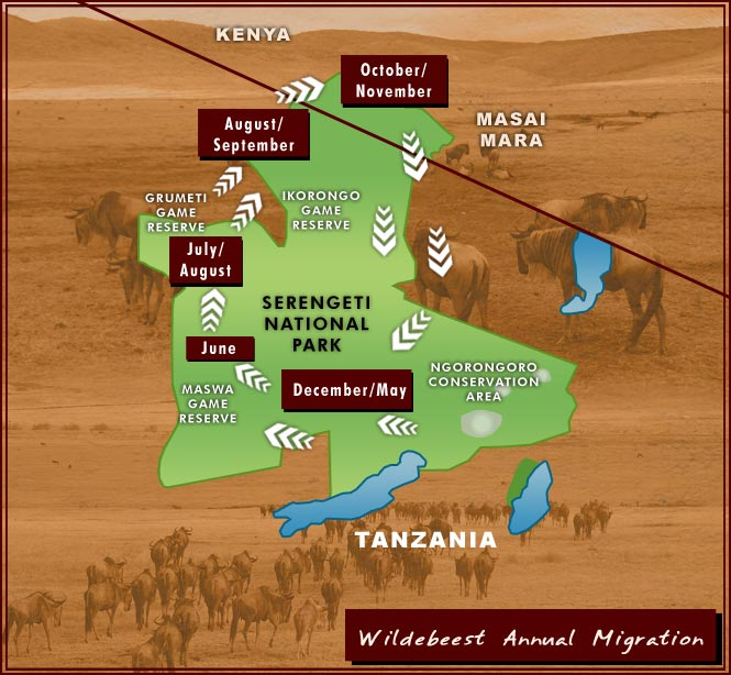 Wildebeest Migration map