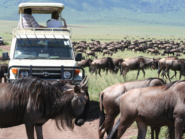 Migration in Serengeti Volmar Safaris